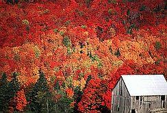 WordPress picture New England Foliage Scene.